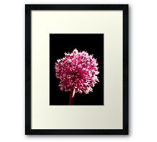 Allium sp. Framed Print