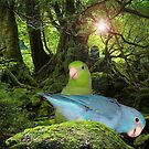 Parrotlet Jungle by Rick Short