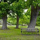 wooden bench under a tree by wildrain