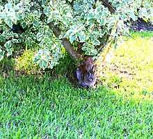 Bunny under a bush by ♥⊱ B. Randi Bailey