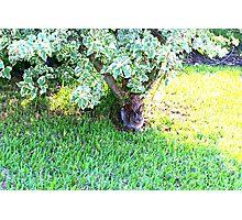 Bunny under a bush Photographic Print