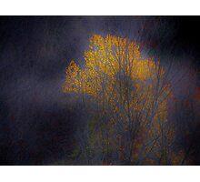 The Golden Tree Photographic Print