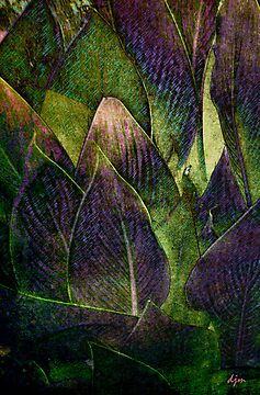 Canna In Purple by Diane Johnson-Mosley