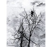 Solitary Sentinel Photographic Print