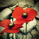 Poppies by Caroline Fournier