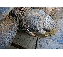 Giant Turtle Photographic Print