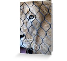 I Spy a Lion Greeting Card