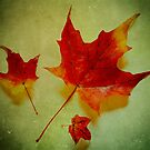 Fall Leaves by Inge Johnsson