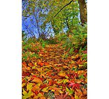 Devon: Pathway to Autumn Photographic Print