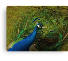 Nature is easily annoyed Canvas Print
