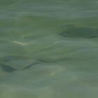 Stingrays by eangelina64