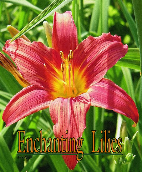 Enchanting Lilies by LoneAngel