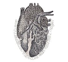 'Secrets I Have Held In My Heart'  Photographic Print