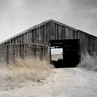 West Texas Drought  by Sherryll  Johnson