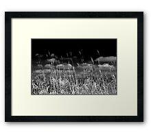 Prairies of the Midwestern US Framed Print