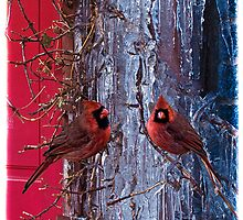 Icicles & Cardinals Holiday Card by Chris Lord