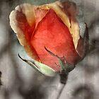 Faithfulness by Lozzar Flowers & Art