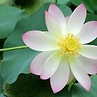 Luscious Lotus by Sabrina Ryan