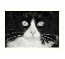 Jasper the Tuxedo Cat Art Print