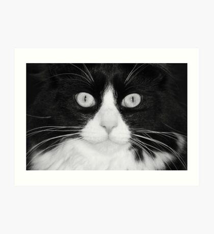 Jasper the Tuxedo Cat Art Print