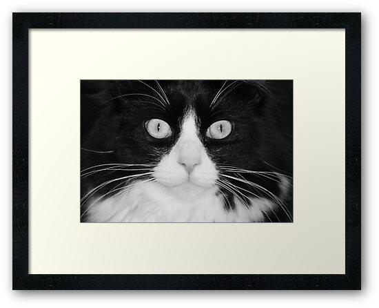 Jasper the Tuxedo Cat by eangelina64