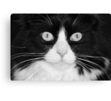 Jasper the Tuxedo Cat Canvas Print
