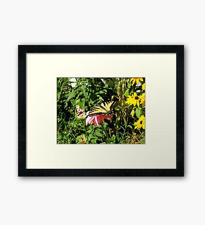 Butterfly World Framed Print