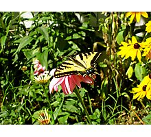 Butterfly World Photographic Print