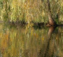 Weeping Reflection by enchantedImages