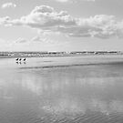 gulls by three by jade adams