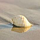 Ashore  by Melissa Dickson