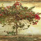 Tree of Passion by Rozalia Toth