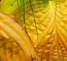 Golden Leaves, Wellington Botanical Gardens Sticker
