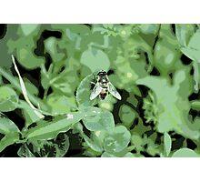 secret nature Photographic Print