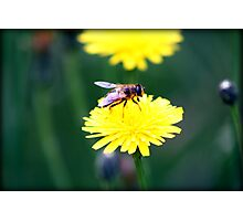 a beeautiful day Photographic Print