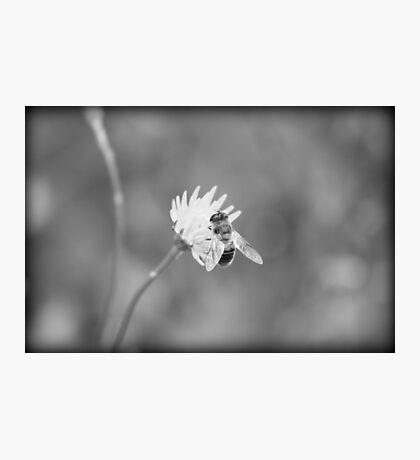 sheer beeauty Photographic Print