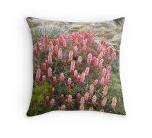 Richea at Newdegate Pass Throw Pillow