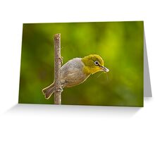 Cape White Eye with Breakfast Greeting Card