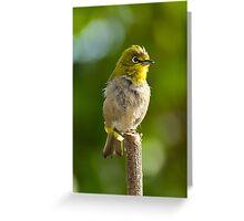 Cape White Eye Greeting Card