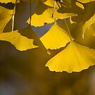 Ginko by fab2can