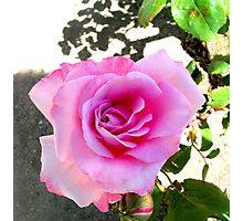 Sweet n Stinky Pinky Photographic Print