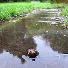 Snail by sandralee1989