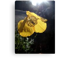 Like a Flower in the Sun Canvas Print