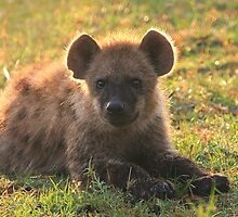 Young Hyena by Jill Fisher