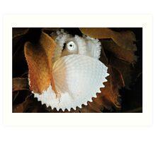 Paper Nautilus Art Print