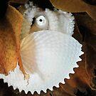 Paper Nautilus by MattTworkowski
