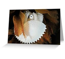 Paper Nautilus Greeting Card