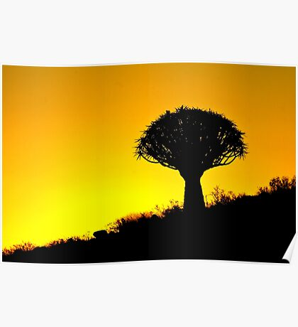 Quiver Tree Silhouette Poster