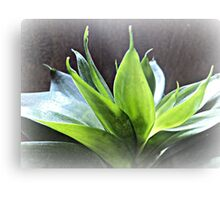 flaunting with humility... Metal Print