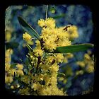 Tan Wattle by Melissa Drummond